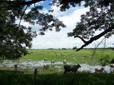 Los llanos venezolanos, fauna, flora, turismo