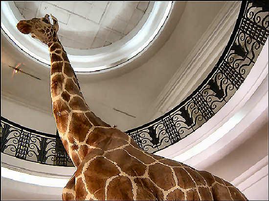 museo de ciencias naturales de caracas: